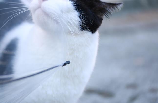スギタカメラの猫写真