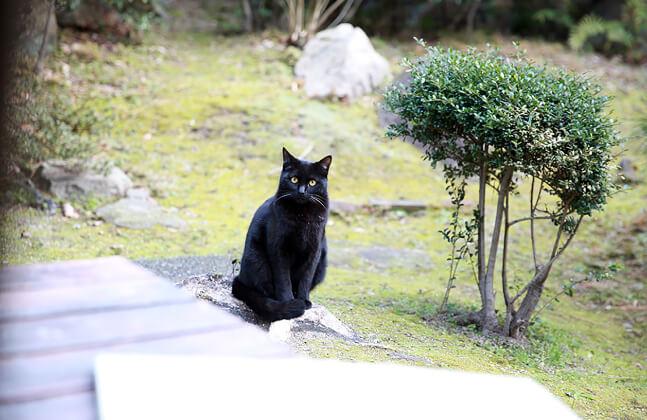 猫好きならではの視点で猫を撮影します