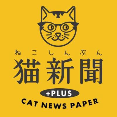 猫新聞編集長